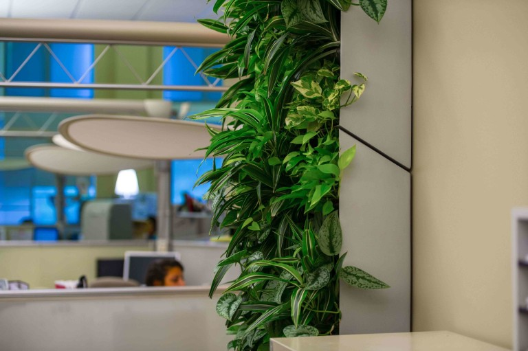 Bring In Beauty with Indoor Plants
