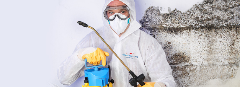 mould removal Gold Coast