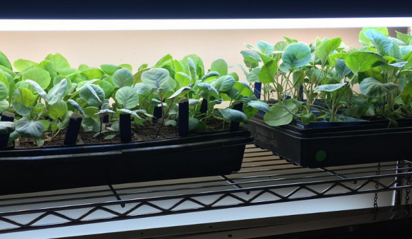 Use Of Economical Indoor LED Grow Lights For Indoor Plants