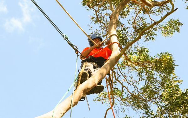 Why You Should Consider Hiring a Qualified Arborist for Tree Removal?