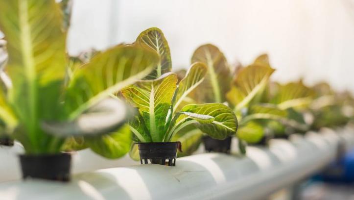 Ways to Start Hydroponics Gardening