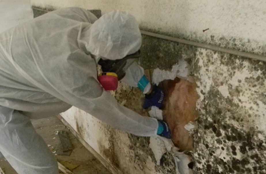Mould removal Auckland