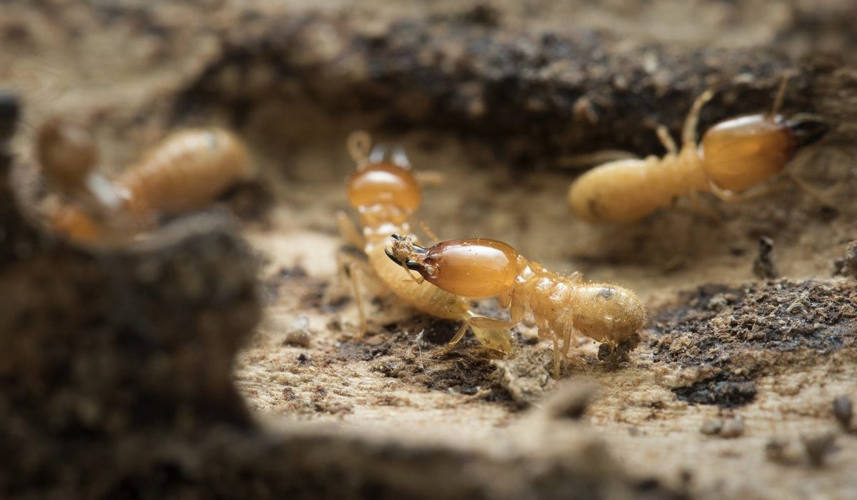 What Price For Complete Termite Treatment Is Suitable
